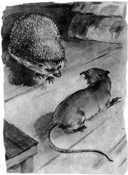 Ежиха крысу заела, огромную, страшную