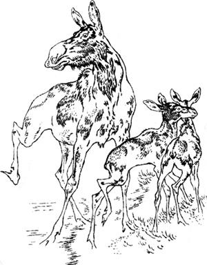 Лосиха с двумя лосятками