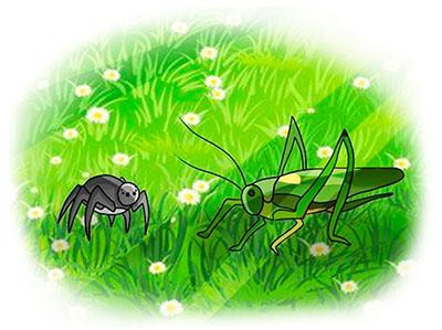 Паук-Тонконожка и зеленый кузнечик Боб