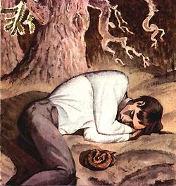 Армянская гадюка лежала под боком