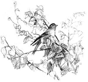 С тех пор Серёжа никогда не ловил птиц