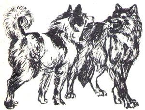Волк сцепился с собакой и грызёт её